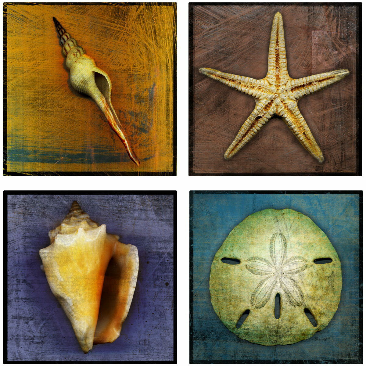 Starfish & Shells Ocean Wall Decal Set Bathroom Decor Vintage Style 12 x 12