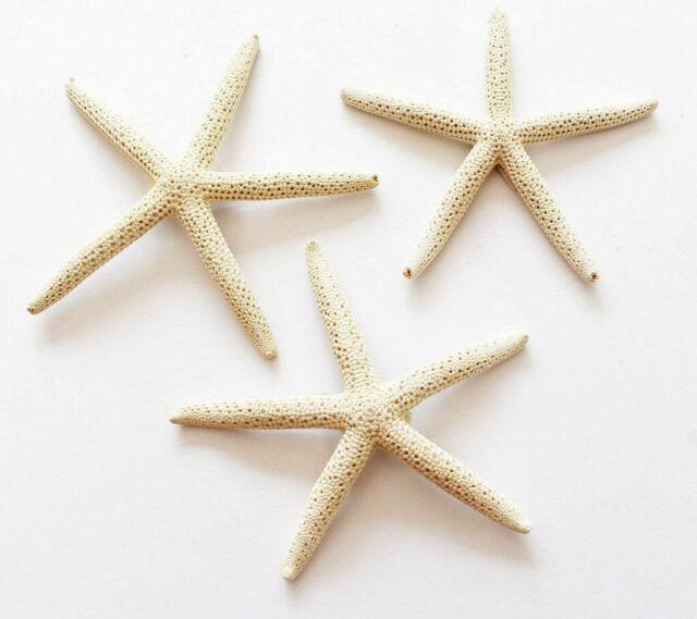 "Starfish 3-4/"" Beach Wedding Nautical Decor Craft Hobby Finger 100 White Pencil"