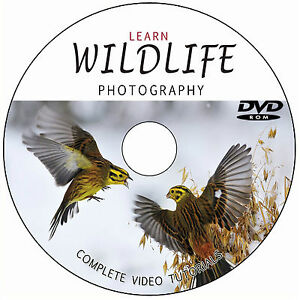 LEARN-MASTER-WILDLIFE-NATURE-PHOTOGRAPHY-DIGITAL-TRAINING-VIDEO-TUTORIALS-ON-DVD