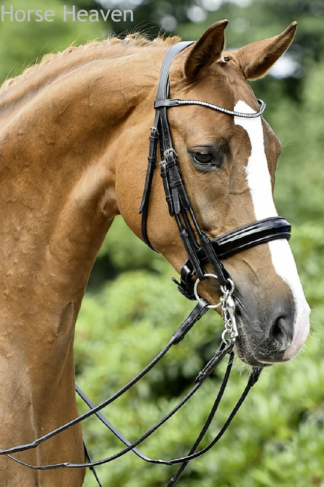 Busse Treviso Rolled Italian Leather Curb Reins  Match the Mailand Double Bridle  best prices and freshest styles