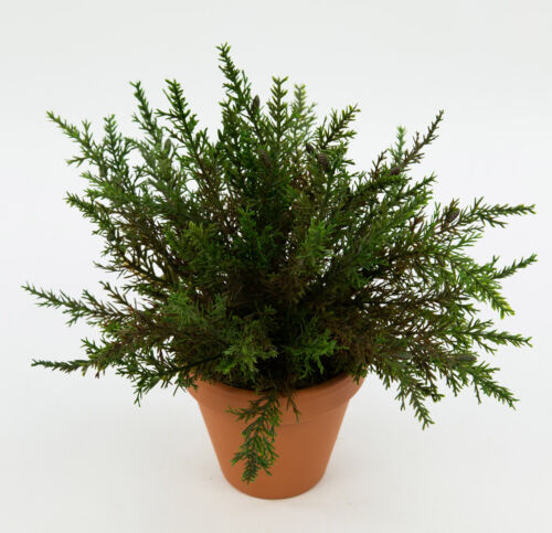 Conifere Busch 26cm-senza vaso-DP arte Piante artificiali Piante conifer