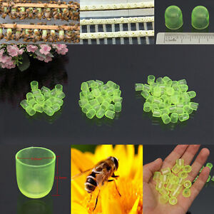 100PCS-Beekeeping-Cell-Cups-Royal-Jelly-Cups-Set-Queen-Bee-Rearing-Equipment-YT