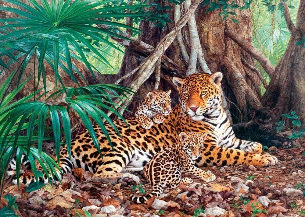 New 3000 pcs pc Puzzle jigsaw Castorland Jaguars in the Jungle C-300280