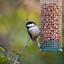 thumbnail 3 - GardenersDream Whole Peanuts - Fresh Premium Wild Bird Seed Garden Food Nut Feed