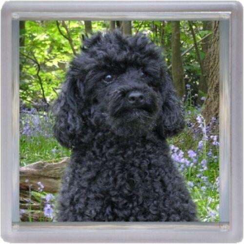 Poodle Coaster Dog Design No 12 by Starprint