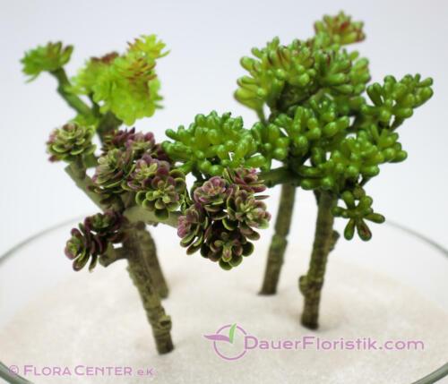 18-20cm künstliche Sukkulente Kaktus Kunstpflanz Sukkulenten 4er Set verzweigt