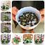 thumbnail 1 - 10Pcs Lotus Flower Seeds Rare 6 Kind Water Plant Bonsai Hydroponic Garden