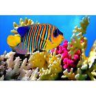 Stickers muraux déco :poisson multicolore 1513