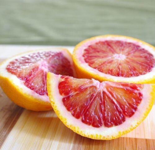 Free Delivery Grafted Citrus Trees Orange Lemon Lime Tangerine Kumquat Dwarf