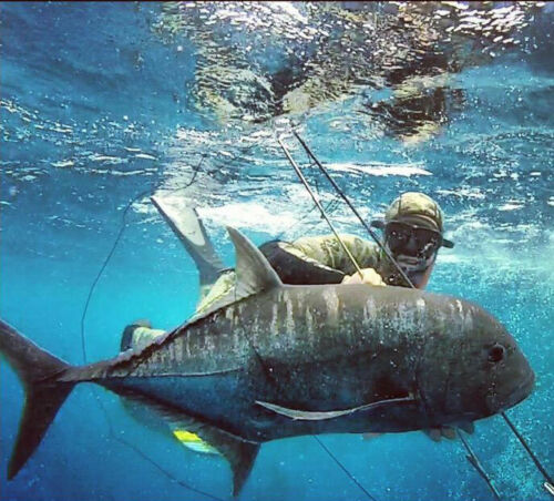 SPEARFISHING WETSUIT SPEARDIVER PACIFIC 3mm 5mm 7mm freediving 2 piece open cell