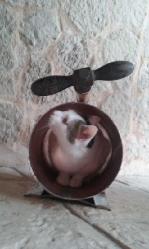 Arbre à chat chaton griffoir grattoir sisal hamac coussin corbeille lit panier