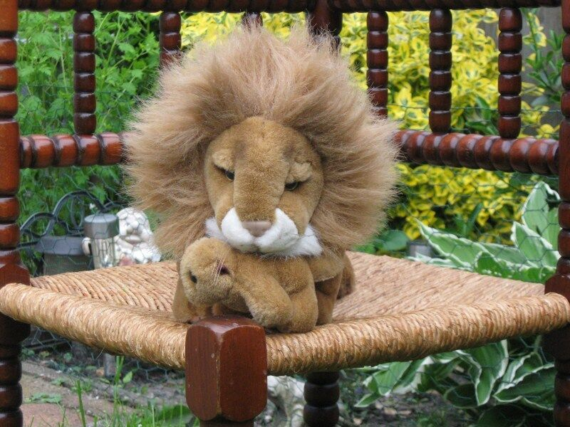 Lion Plush Carrying Baby Cub in Mouth Kempenaar Holland