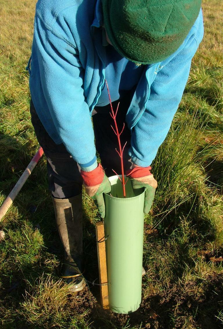 10 x Tubex Shrubshelter für Sträucher 60 cm Ø144-200 mm Baumschutz Verbissschutz