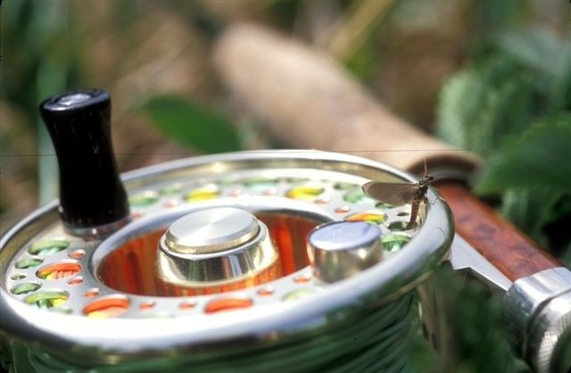 New   Albright Tempest I Fly  Reel 5 6 gold  No fly rod Price Reduced  By 30,00.  best reputation