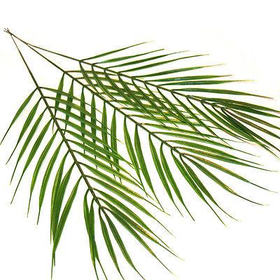 Artificial Palm Leaves - Choose Qty  - Wedding Crafts Palm Sunday Leaf Tropical