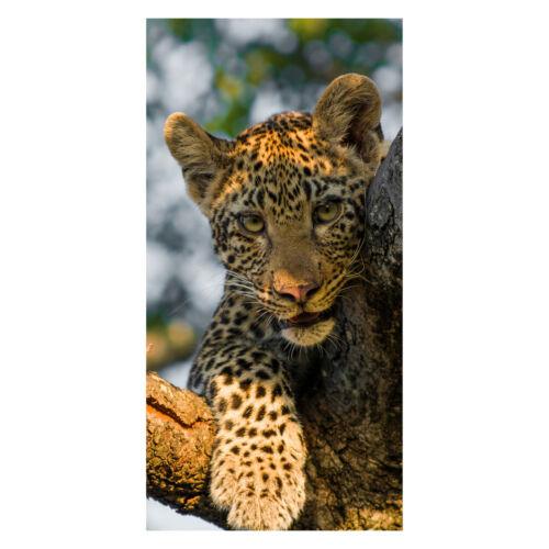 Tür-Aufkleber Türbild Wandbild Türtapete Leopard in Südafrika Tapete