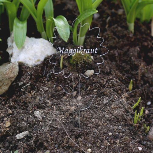 Gartenstecker Kräuterschilder Pflanzens Acrylglas Pflanzschilder Blume farblos