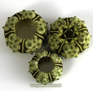Sea-urchin-natural-stone-2-3-cm-wide-Perfect-for-crafts-and-other-creative-uses