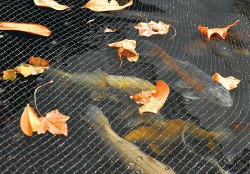 """Hozelock Koi Pond Water Garden Cover Net 20 Feet x 33 Feet mesh approx 1//2/"""" dia"""