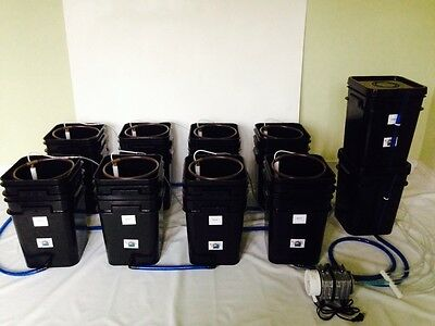 Hydroponics Recirculation DWC grow system like waterfarm 8 pack kit