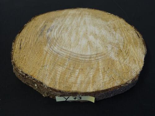 Tanne-Fichte,Baumscheibe,Holzscheibe,Floristik Holzscheiben,basteln