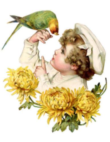 Vintage Image Victorian Little Boy Parrot Chrysanthemum Decals KID680