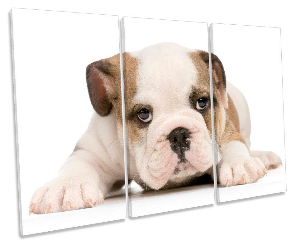 British Bulldog Puppy Cute TREBLE CANVAS WALL ART Box Framed Picture
