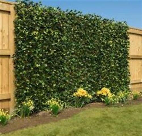 Trellis Expanding Scisor Willow 60x180cm Climbing Garden Plant Wall Fence Screen