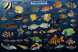 Image Is Loading Tropical Fish Laminated Aquarium Educational Science Class Chart