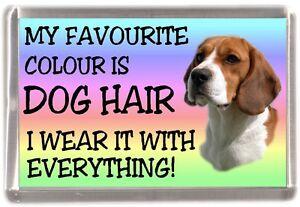 Beagle-Dog-Fridge-Magnet-034-My-Favourite-Colour-is-Dog-Hair-034-by-Starprint