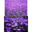 miniatura 30 - Ricarica Profumatore a bastoncino per ambiente di casa,Diffusore di Profumo.
