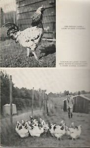 COMPLETE-POULTRY-KEEPER-amp-FARMER-1938-Leslie-Pearce-Gervis-GOOD-USED-COPY