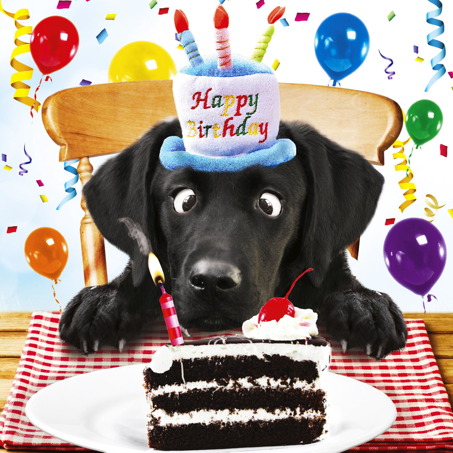 black labrador birthday card for me funny dog birthday cake greeting card new ebay. Black Bedroom Furniture Sets. Home Design Ideas