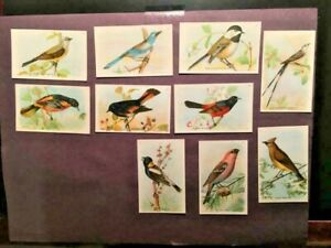 1918-Useful-Birds-of-America-Arm-and-Hammer-10-Trade-Cards-Church-Dwight-NMMT