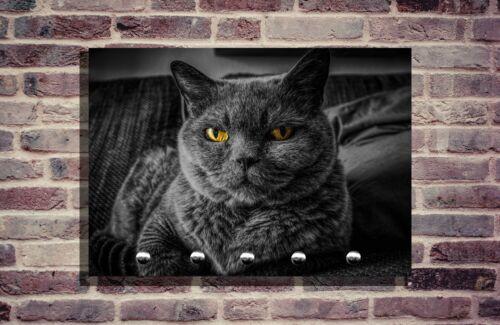 Schlüsselbrett Schlüsselhalter Foto Individuell schlüsselleiste Katze Katzen Cat