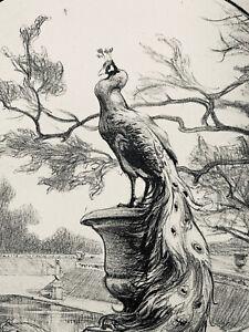 Adolphe gumery engraving lithograph art nouveau peacock study peacock bird
