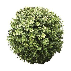 Imperdibile siepe eucalipto spera cm 23 per abbellire balconi ...