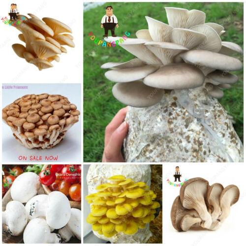Variety Of Edible Seeds Plants Mushrooms Pleurotus Delicious A Mixed 100pcs