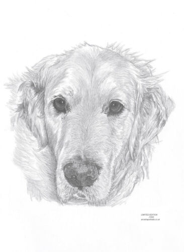 GOLDEN RETRIEVER dog Edit art drawing print 2 sizes A4//A3 Note Card 2