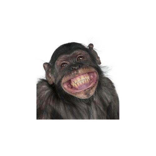 Affiche poster singe sourire  67651108 Art déco Stickers