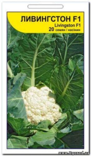 "Seeds of cauliflower Livingston F1 TM /"" Syngenta /"" 20 seeds S0498 Farmers idea"