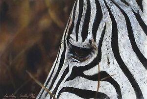 "Lyndsey selley ""DRAMMATICO"" Zebra Savannah firmato LIM ED! dimensioni: 29cm x 37cm NUOVO"