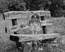 Gray Black Yellow Home Decor Owl on Bench Wall Art Photo Print Picture Matted