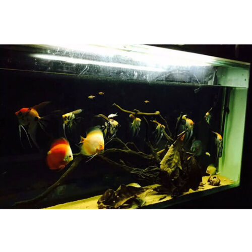 50 g Indian Almond Leaves Leaf Shrimp Fish Aquarium Care Make Water Nice Supply
