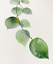 miniature 4 - Bathroom Prints Botanical Eucalyptus STUNNING FINE ART PICTURE Minimalist funny