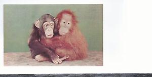 034-Posing-034-Greetings-From-Panama-City-FL-Unused-Postcard-544