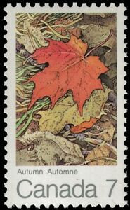 CANADA-537-Four-Seasons-034-Maple-Leaf-in-Autumn-034-pa56037