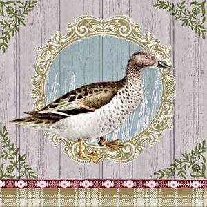 20 TOVAGLIOLI TOVAGLIOLI Duck Portrait 33 x 33 Wild Anatra cornice immagine bordato VINTAGE  </span>