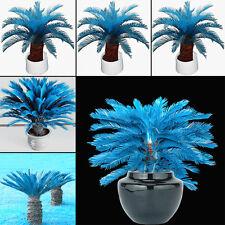 RARE!!! 100pcs Blue Cycas Seeds Sago Palm Tree Beeds Bonsai Blower Seeds New
