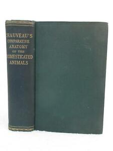 Chauveau-COMPARATIVE-ANATOMY-OF-THE-DOMESTICATED-ANIMALS-1908-D-Appleton-NY